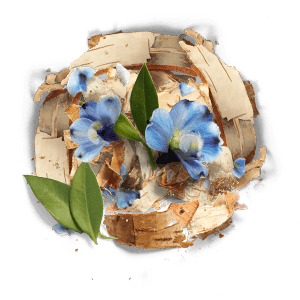 Herbal Essences Birch Bark Extract