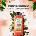 Herbal Essences Lightly Conditions